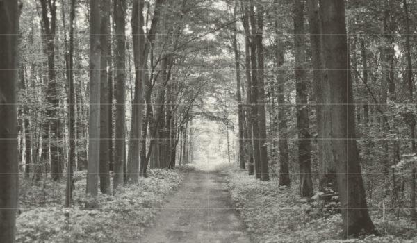 Zdjęcie Kompozycja ścienna Tubądzin All in white 1 209,8×359,8